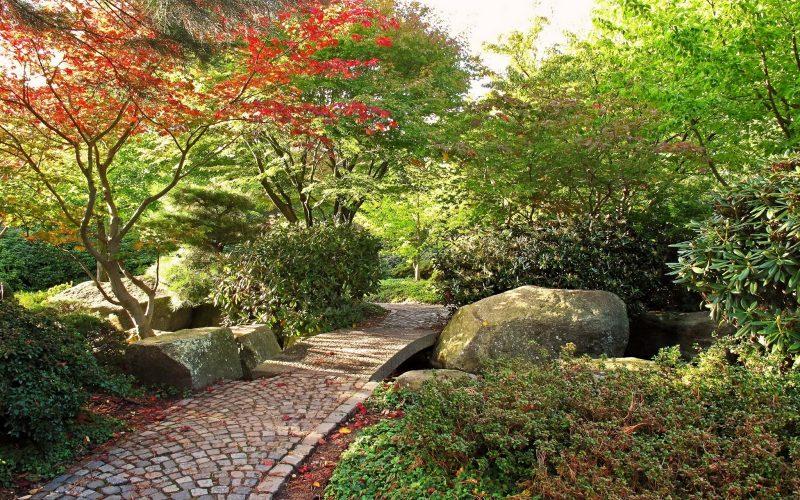 Rboles de hoja perenne para jard n y sus ventajas for Arboles frutales de hoja perenne para jardin